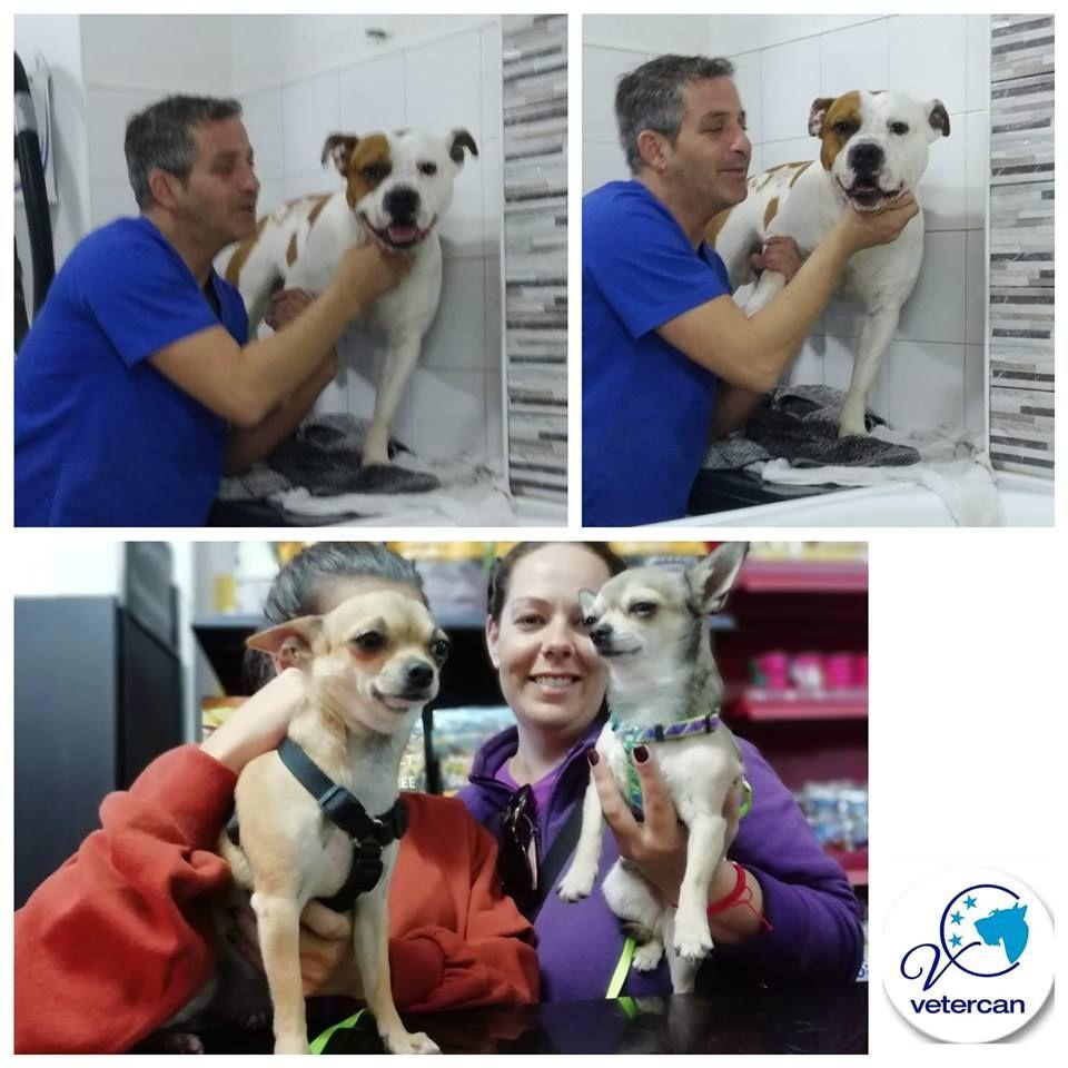 Foto 12 de Veterinarios en  | Vetercan