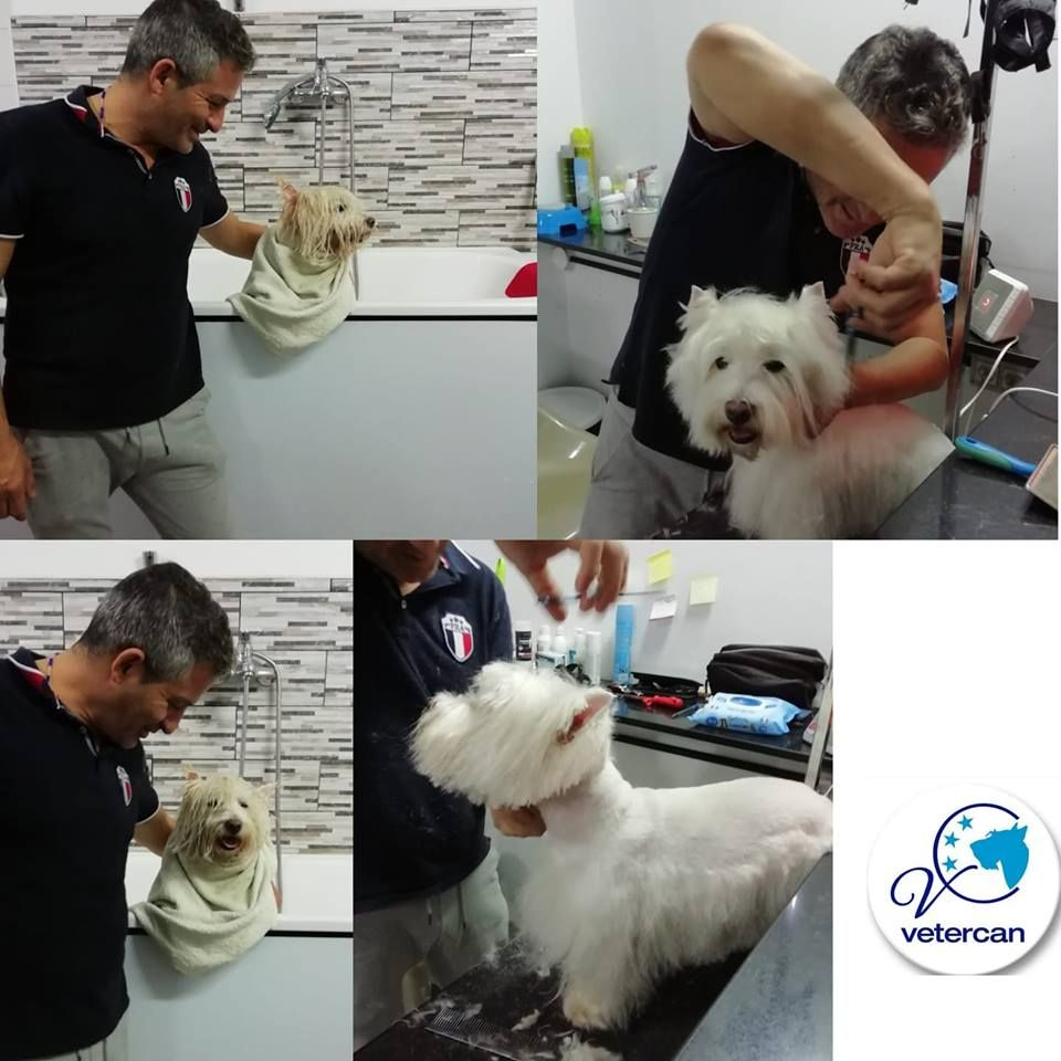 Foto 22 de Veterinarios en  | Vetercan