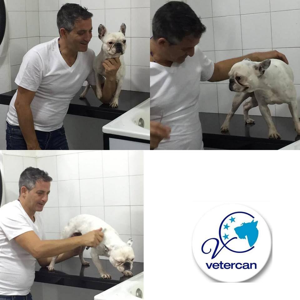 Foto 26 de Veterinarios en  | Vetercan
