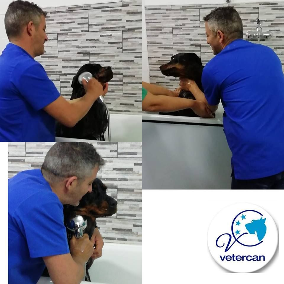 Foto 25 de Veterinarios en  | Vetercan