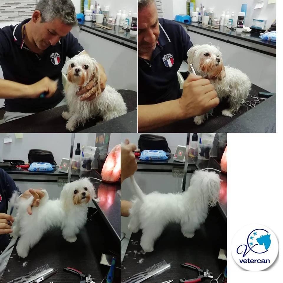 Academia de formación para peluquería canina: Servicios de Vetercan