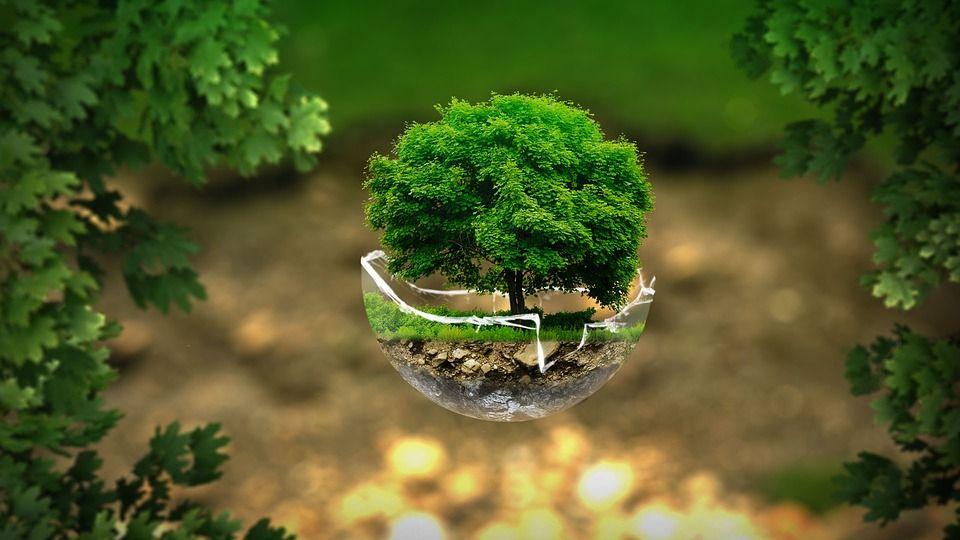 Productos ecológicos: Productos de Corbimat