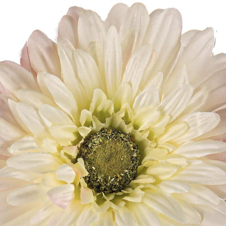 Flores decorativas, Gerberas blancas