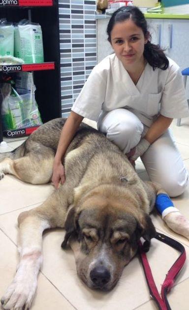 Clínica veterinaria con servicio de urgencias 24 horas en Vallecas (Madrid)
