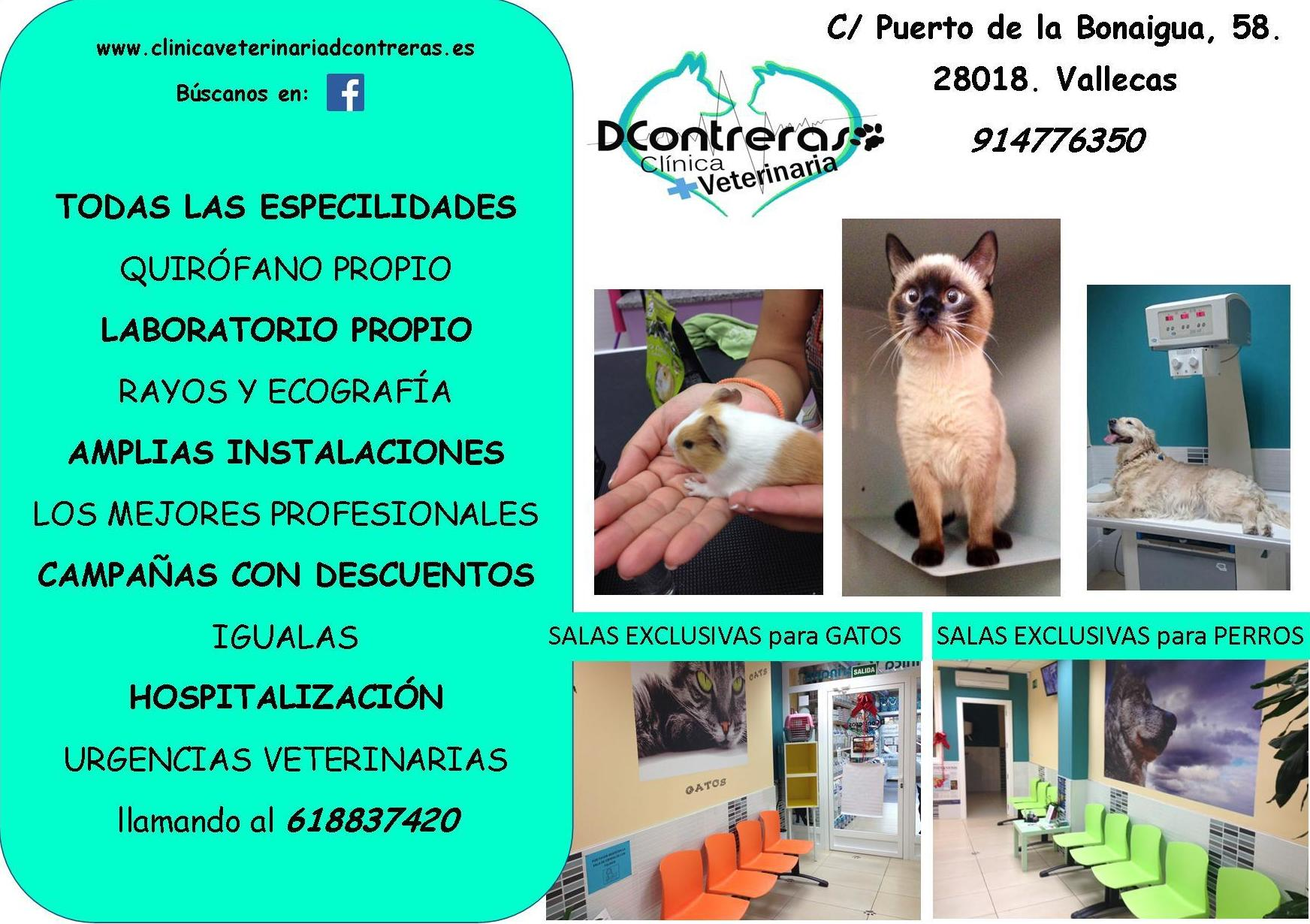 CLINICA VETERINARIA EN VALLECAS