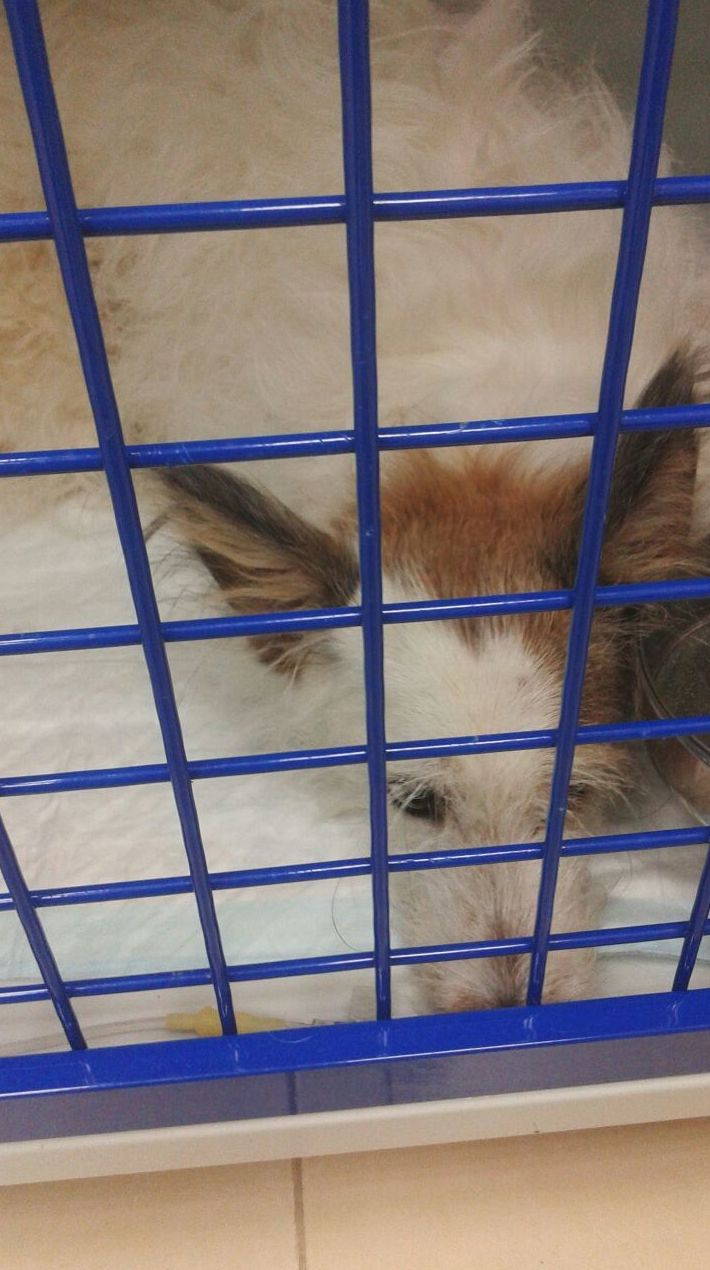 Lulu hospitalizada en vallecas