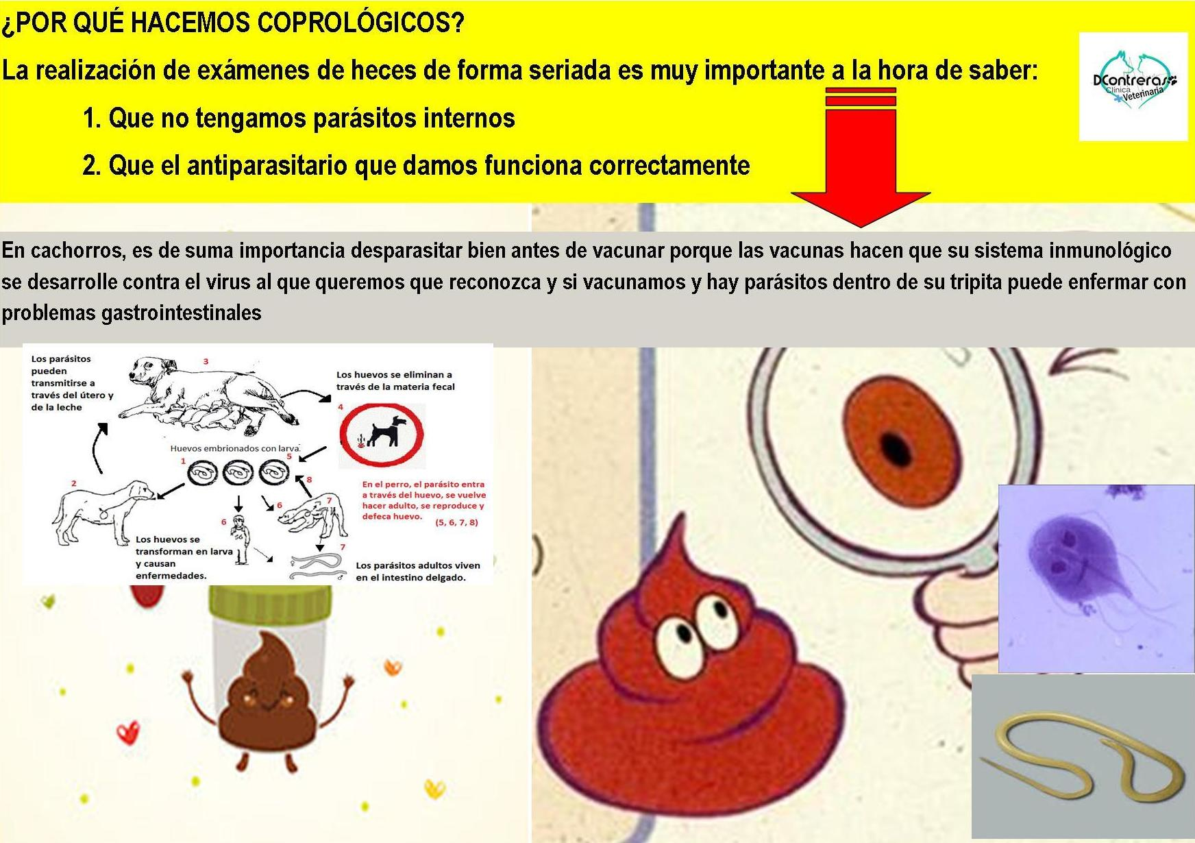 Clinica veterinaria en Vallecas: explicamos porqué se hacen coprológicos