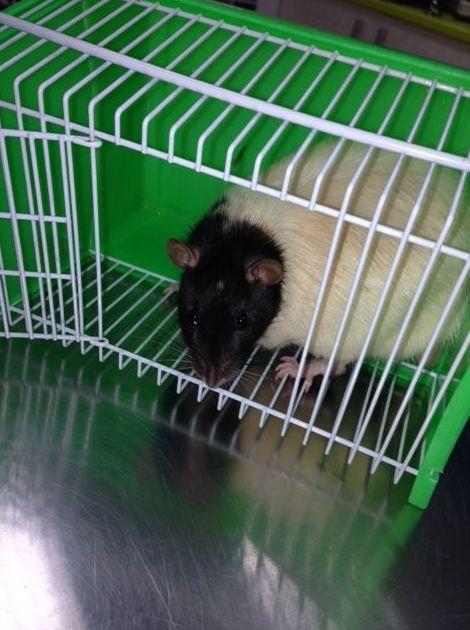 Veterinarios para roedores en Vallecas