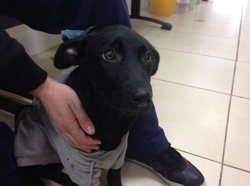 Servicios veterinarios de urgencia en Puente de Vallecas