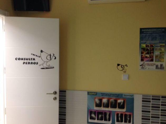 Consulta veterinaria para perros en Vallecas
