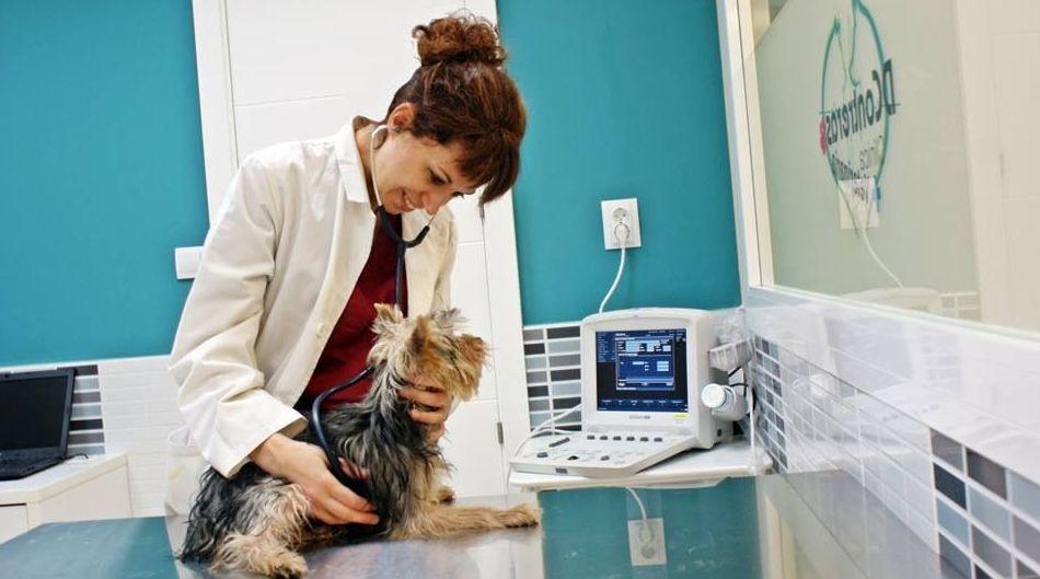 Servicio veterinario integral en Vallecas