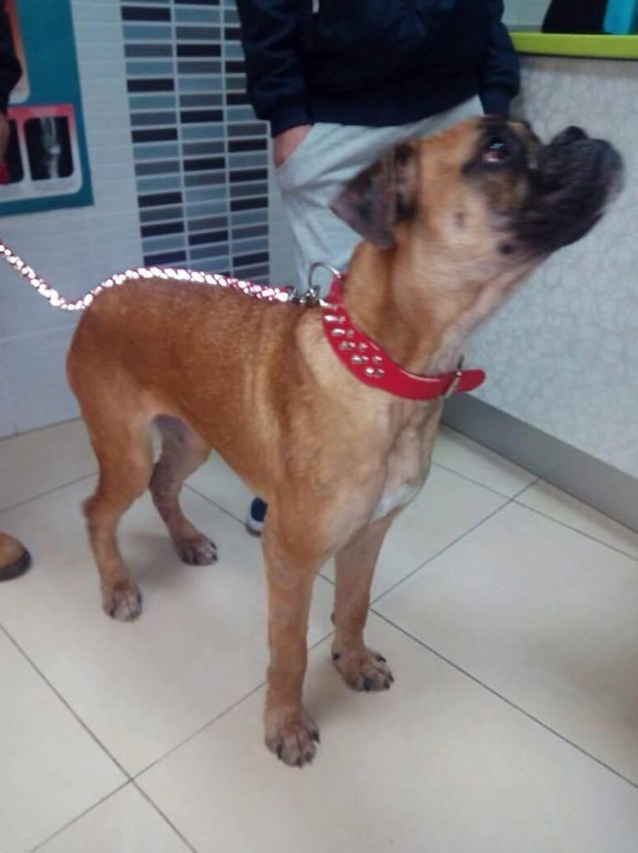 Atención veterinaria para tu mascota en Vallecas