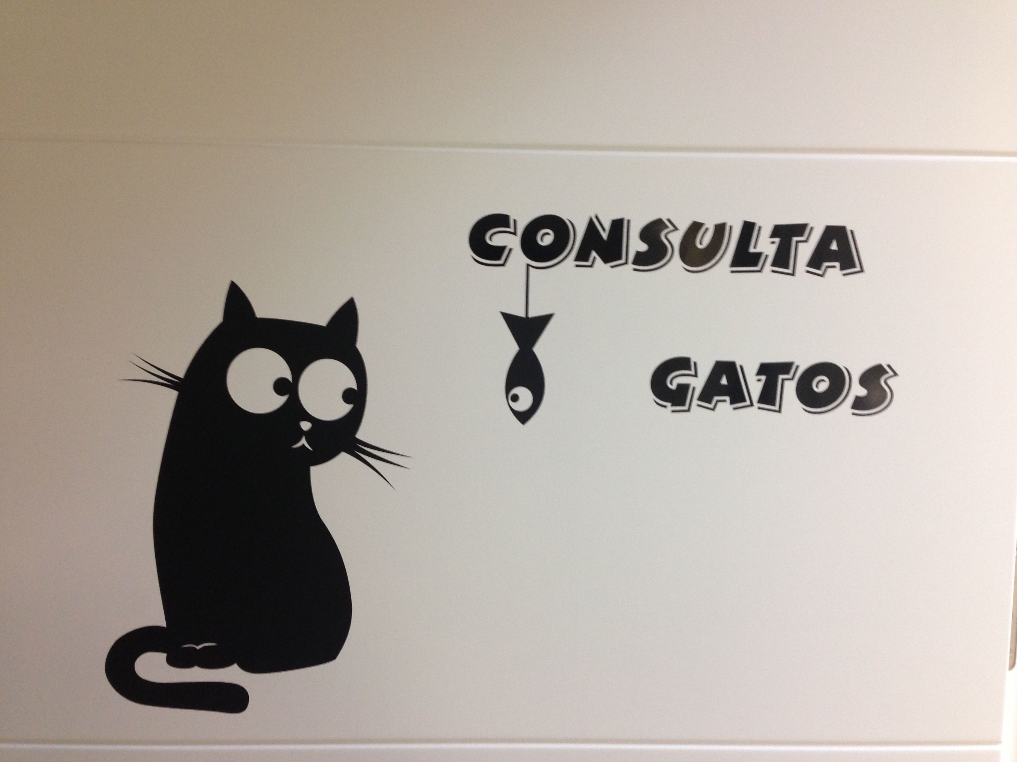 Urgencias veterinarias para gatos en Vallecas