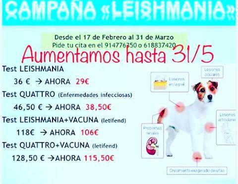 Campaña de LEISHMANIA: Servicios y ofertas de Clínica Veterinaria DContreras
