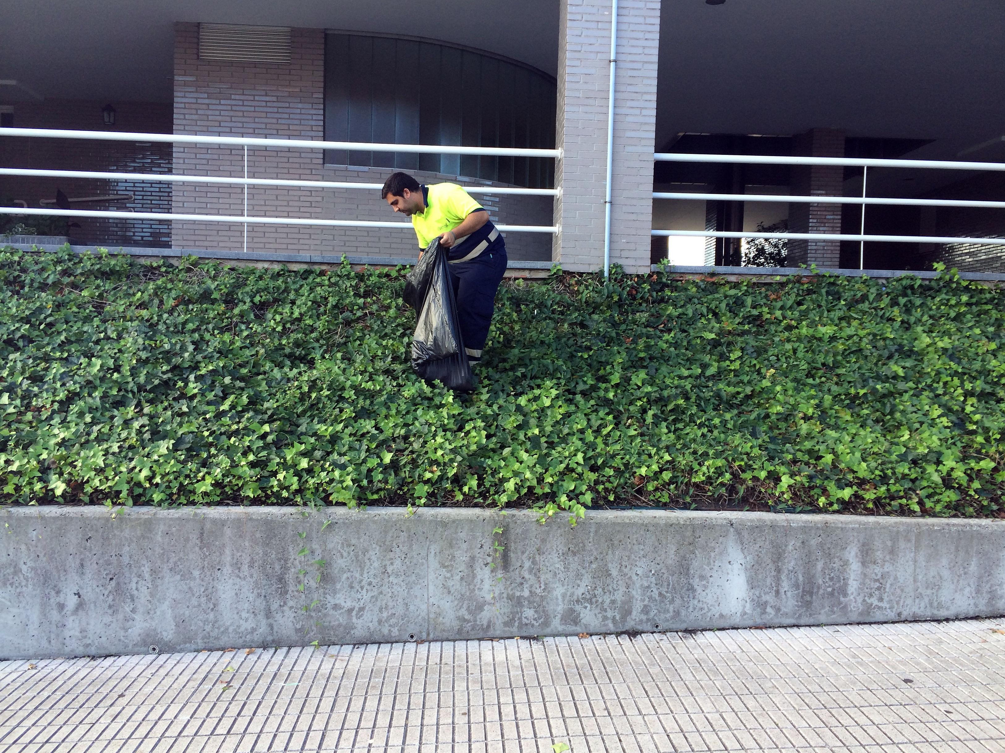 Especialistas en trabajos de jardinería y mantenimiento en Asturias