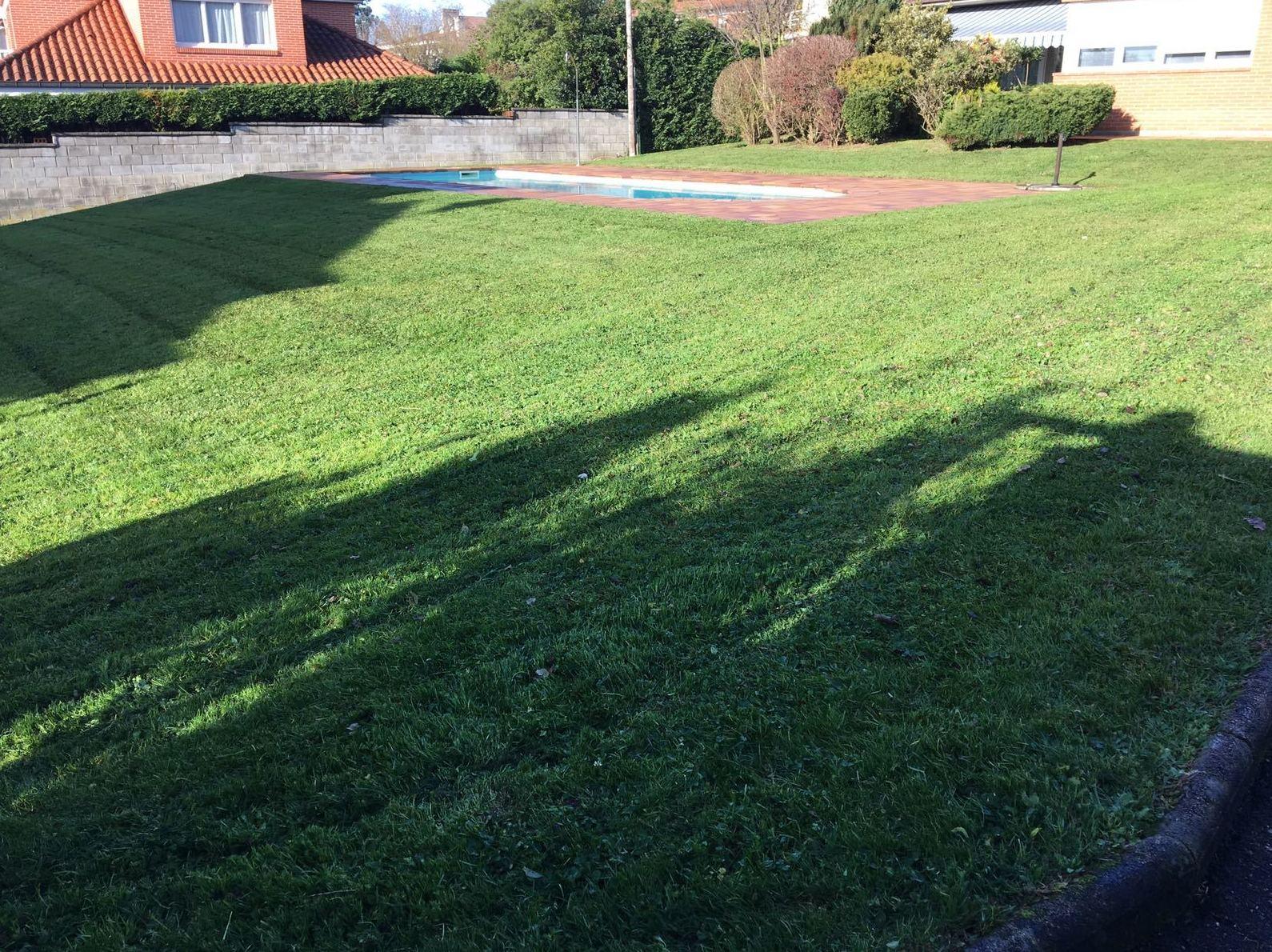 cuidado y mantenimiento de cesped en Gijón - Asturias