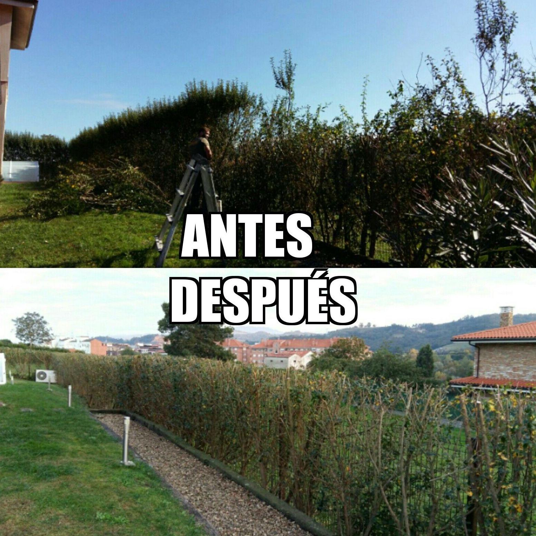 Diseño y reformas de jardines en Gijón - Asturias