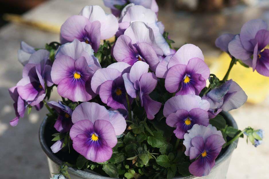 Comprar plantas en Cartagena