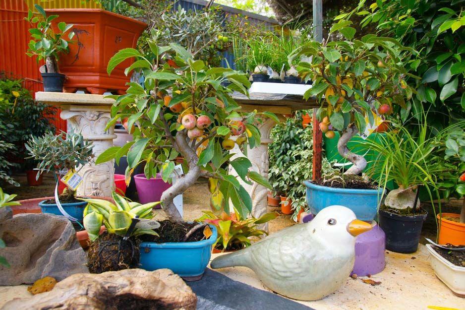 Artículos de jardinería en Cartagena