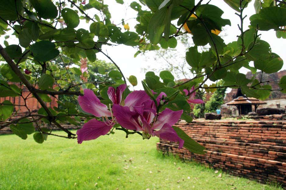 Proyectos de jardinería en Cartagena