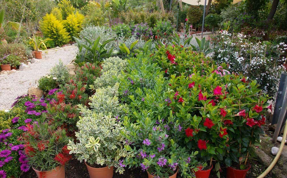 Vivero de plantas de jardín en Cartagena