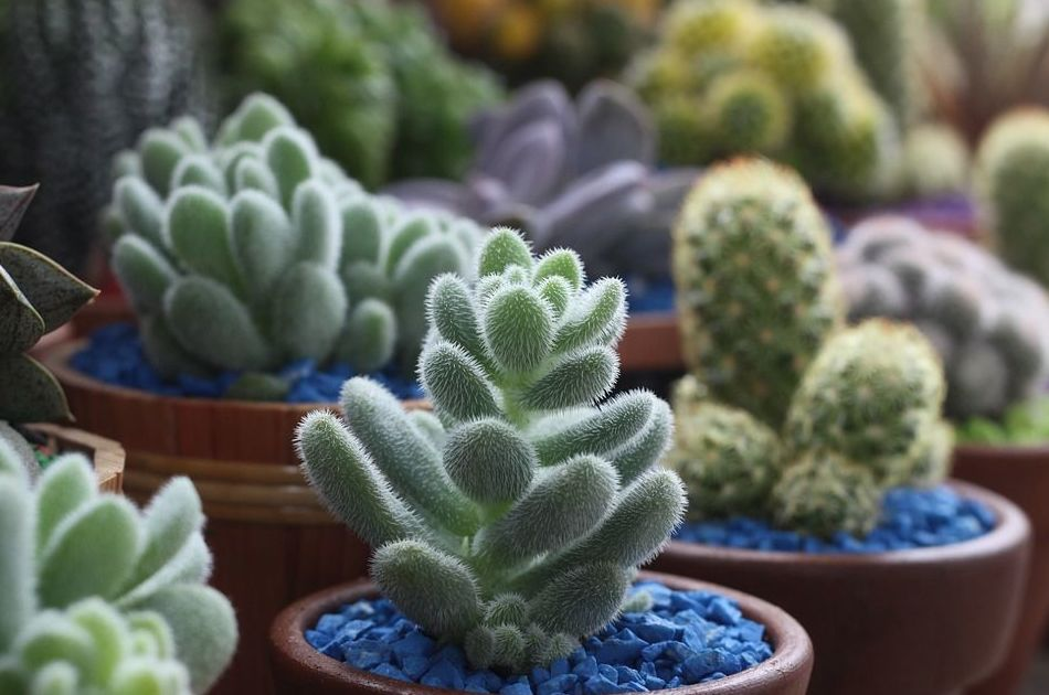 Cactus: Productos de El Vivero de Maruja
