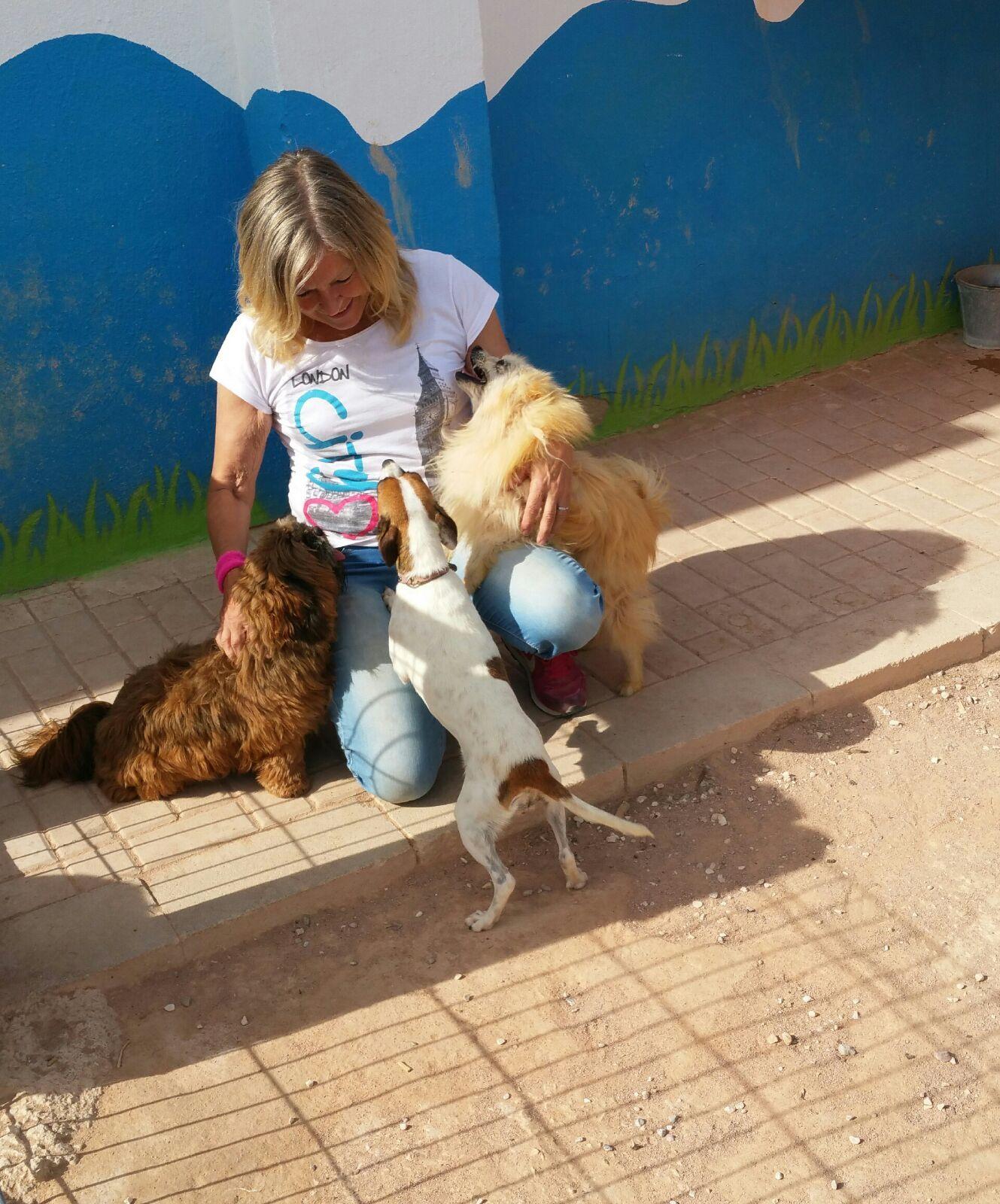 Hotel canino en Alicante
