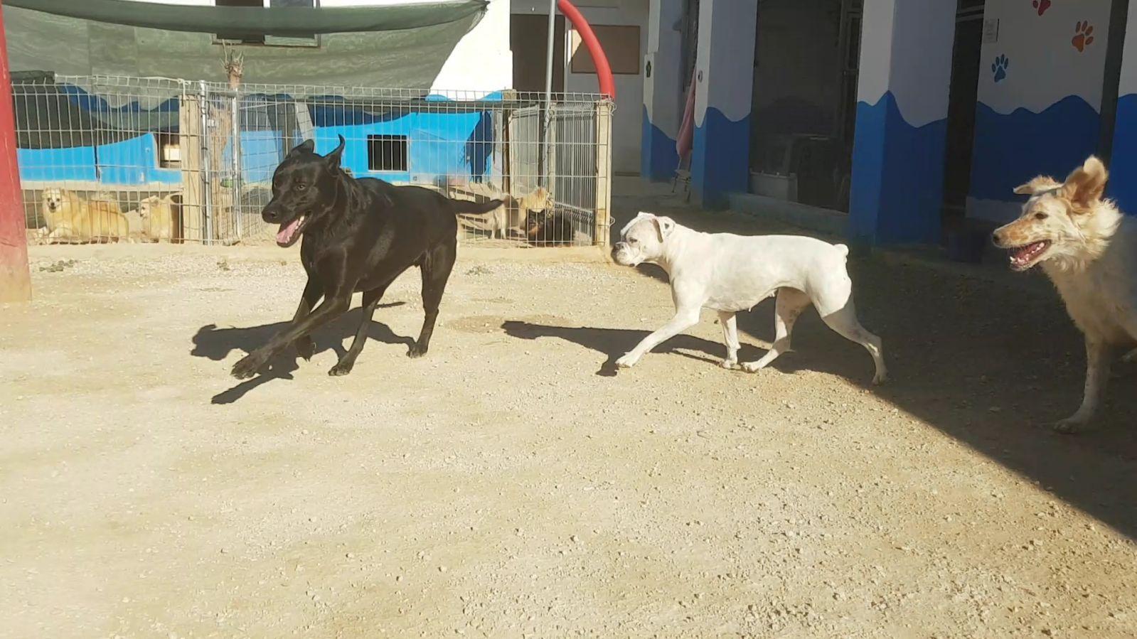 Guardería canina en Alicante