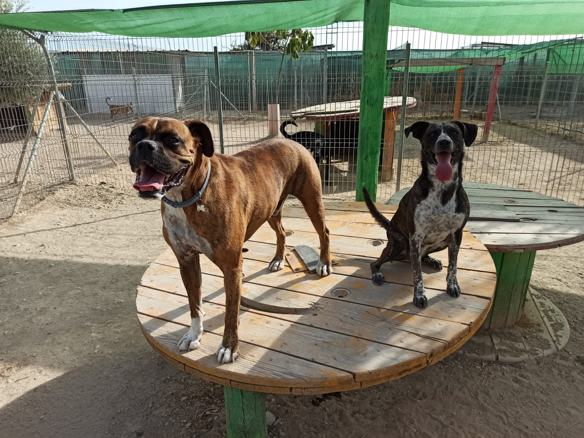 Perros en uno de los Parques