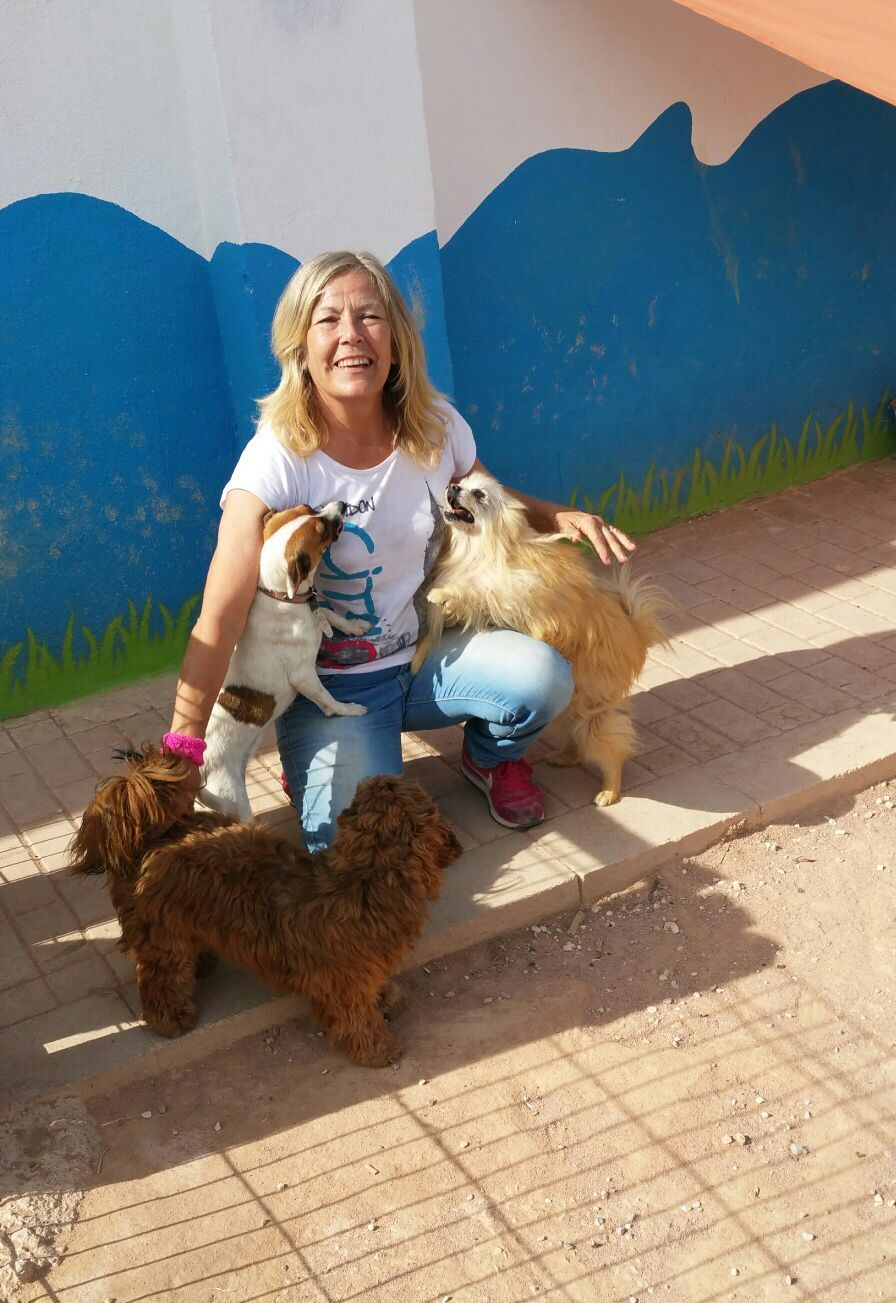 Guardería canina en Alicante