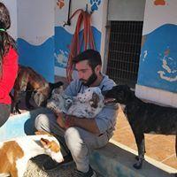 Adiestramiento de perros en Alicante