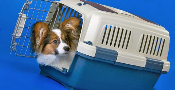 Transporte animales compañia: Servicios de Taxi Cambrils