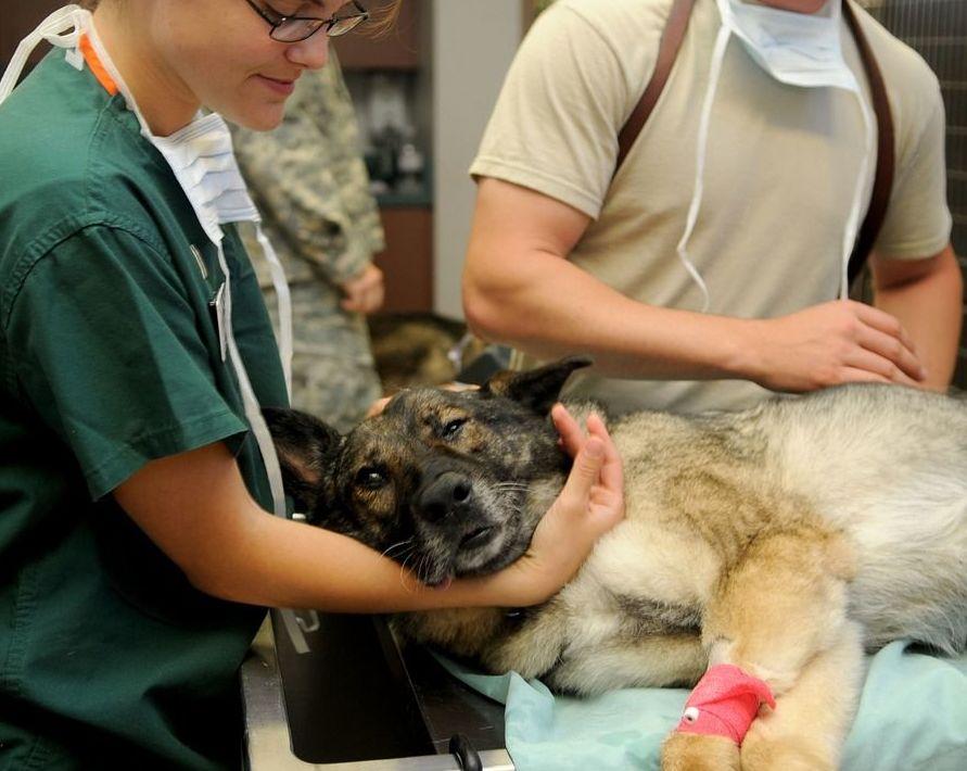 Nuevo pioconsejo: La esterilización en perros, gatos conejos y hurones