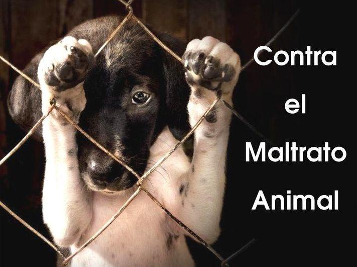 Tumban la propuesta de ley contra el maltrato animal