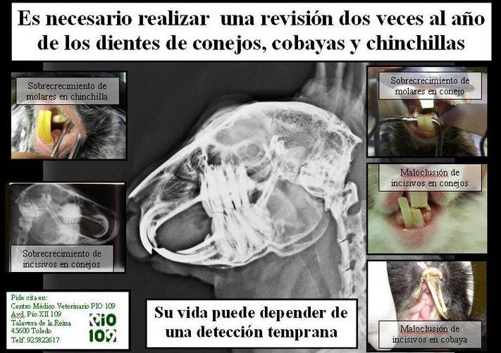 Foto 22 de Veterinarios en Talavera de la Reina | Centro Médico Veterinario Pío 109