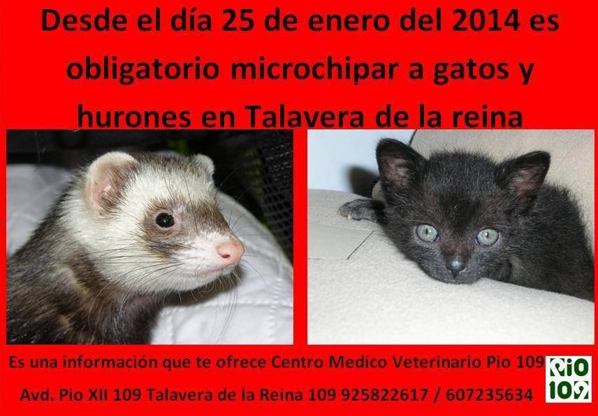 Foto 17 de Veterinarios en Talavera de la Reina | Centro Médico Veterinario Pío 109