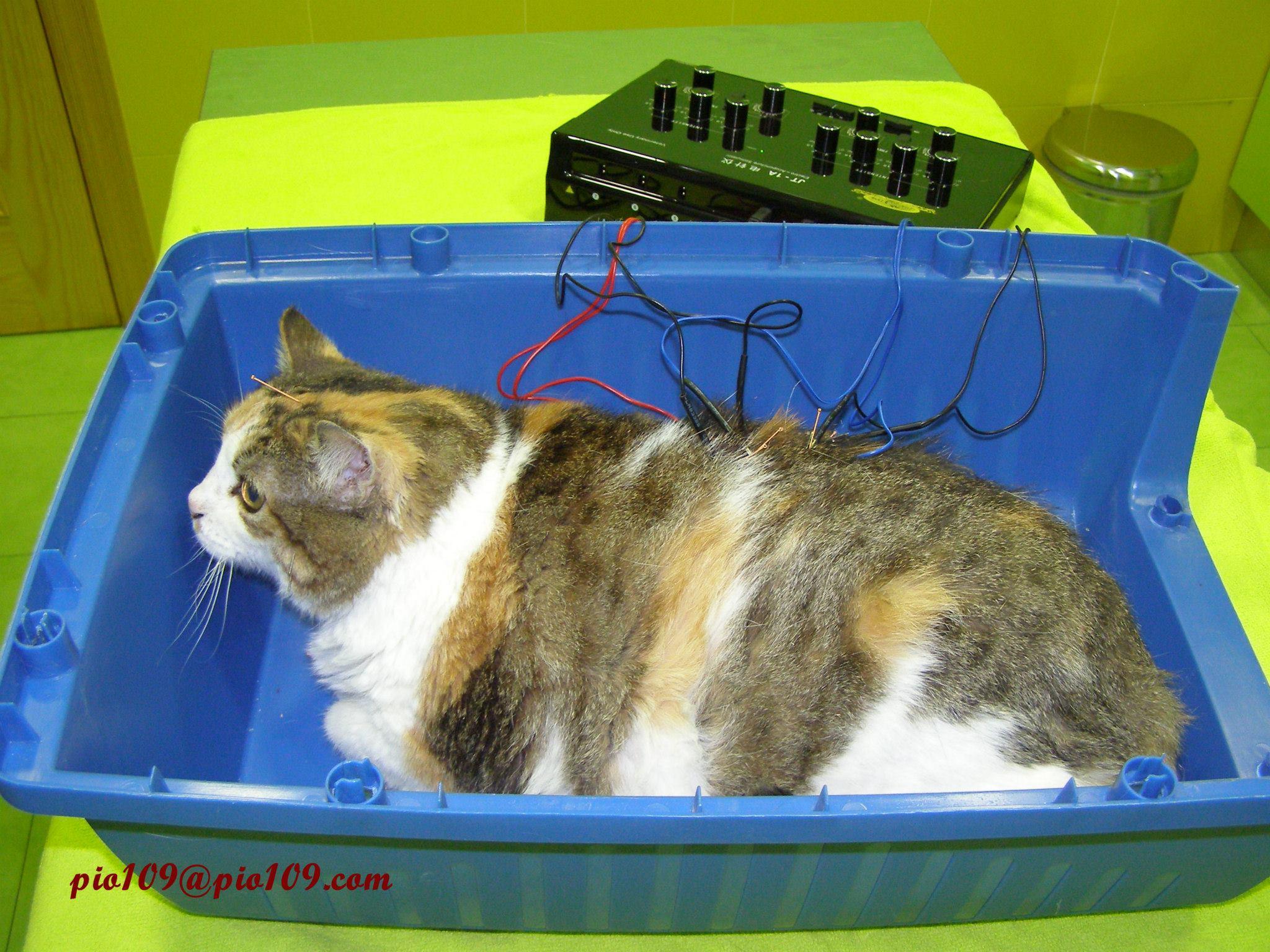 Mina en una sesión de electroacupuntura