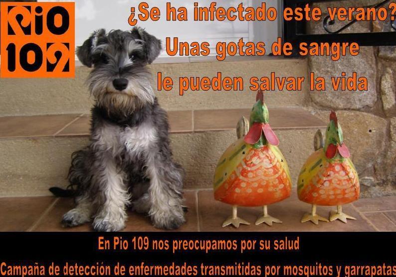 Foto 24 de Veterinarios en Talavera de la Reina | Centro Médico Veterinario Pío 109