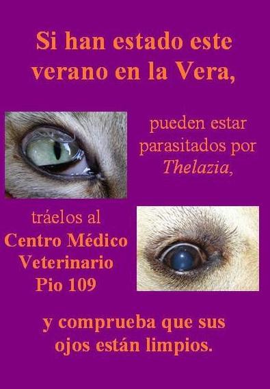 Foto 19 de Veterinarios en Talavera de la Reina | Centro Médico Veterinario Pío 109