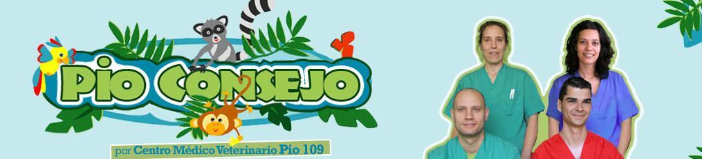 Pio 109 en Todo Talavera