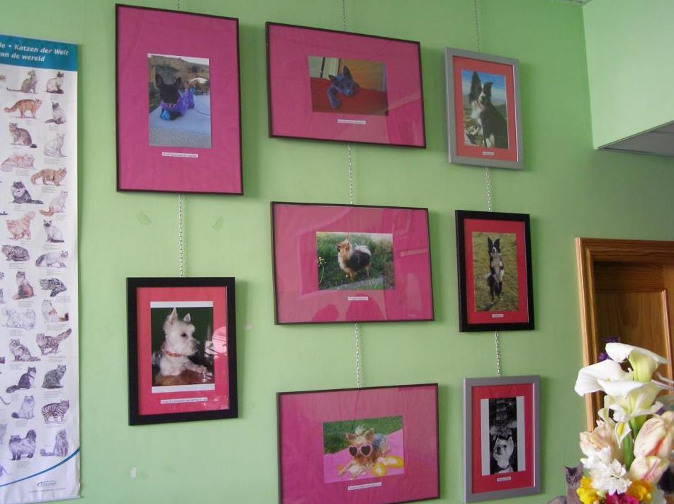 Foto 97 de Veterinarios en Talavera de la Reina | Centro Médico Veterinario Pío 109