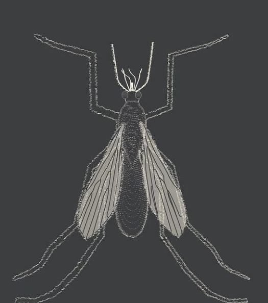 Nuevo PIo Consejo: La enfermedad del mosquito, leishmania