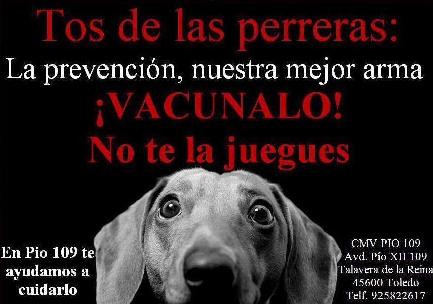 Foto 20 de Veterinarios en Talavera de la Reina | Centro Médico Veterinario Pío 109