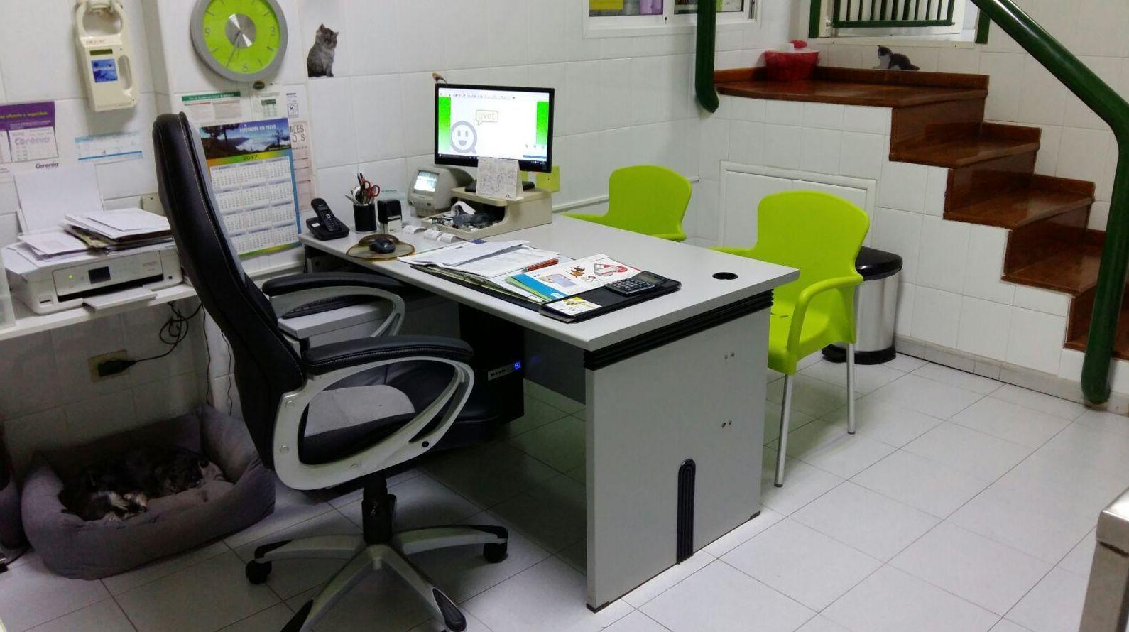Consulta medicina interna: Servicios de Clínica Veterinaria San Lucas
