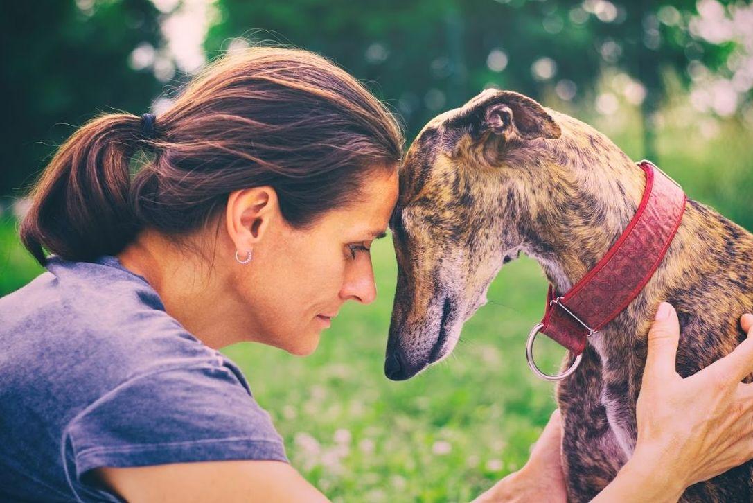 Las vacunas de tu perro siempre al día
