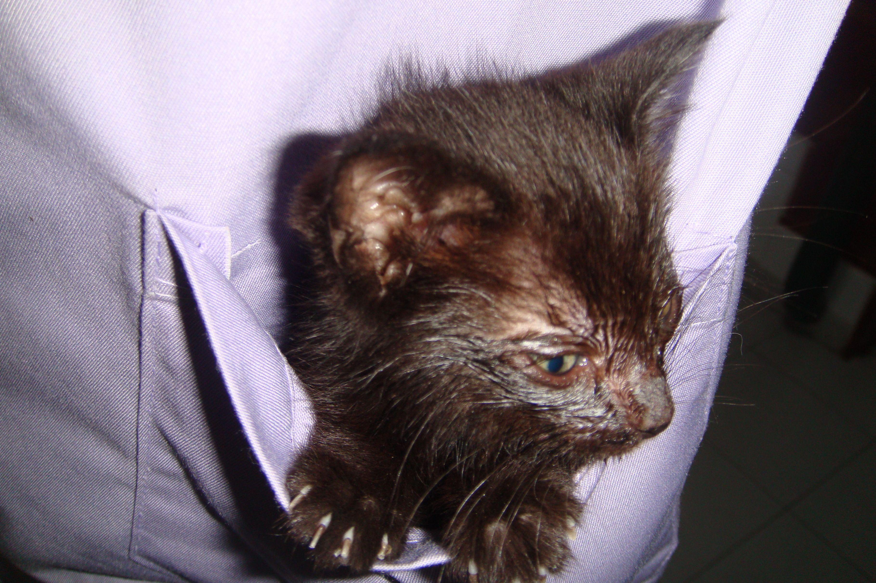 Servicios de diagnóstico veterinario en Tenerife