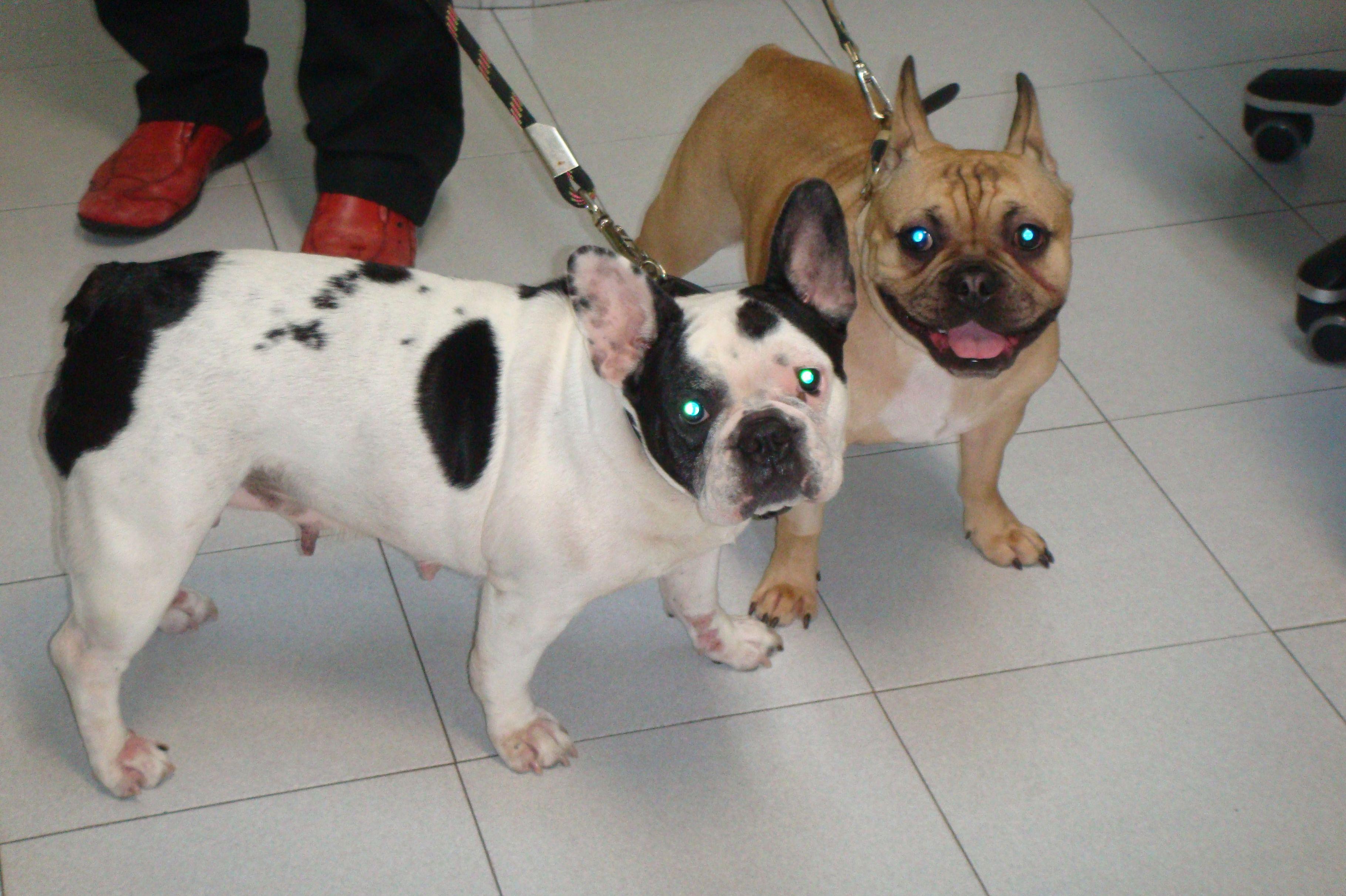 Limpiezas dentales para mascotas en Tenerife