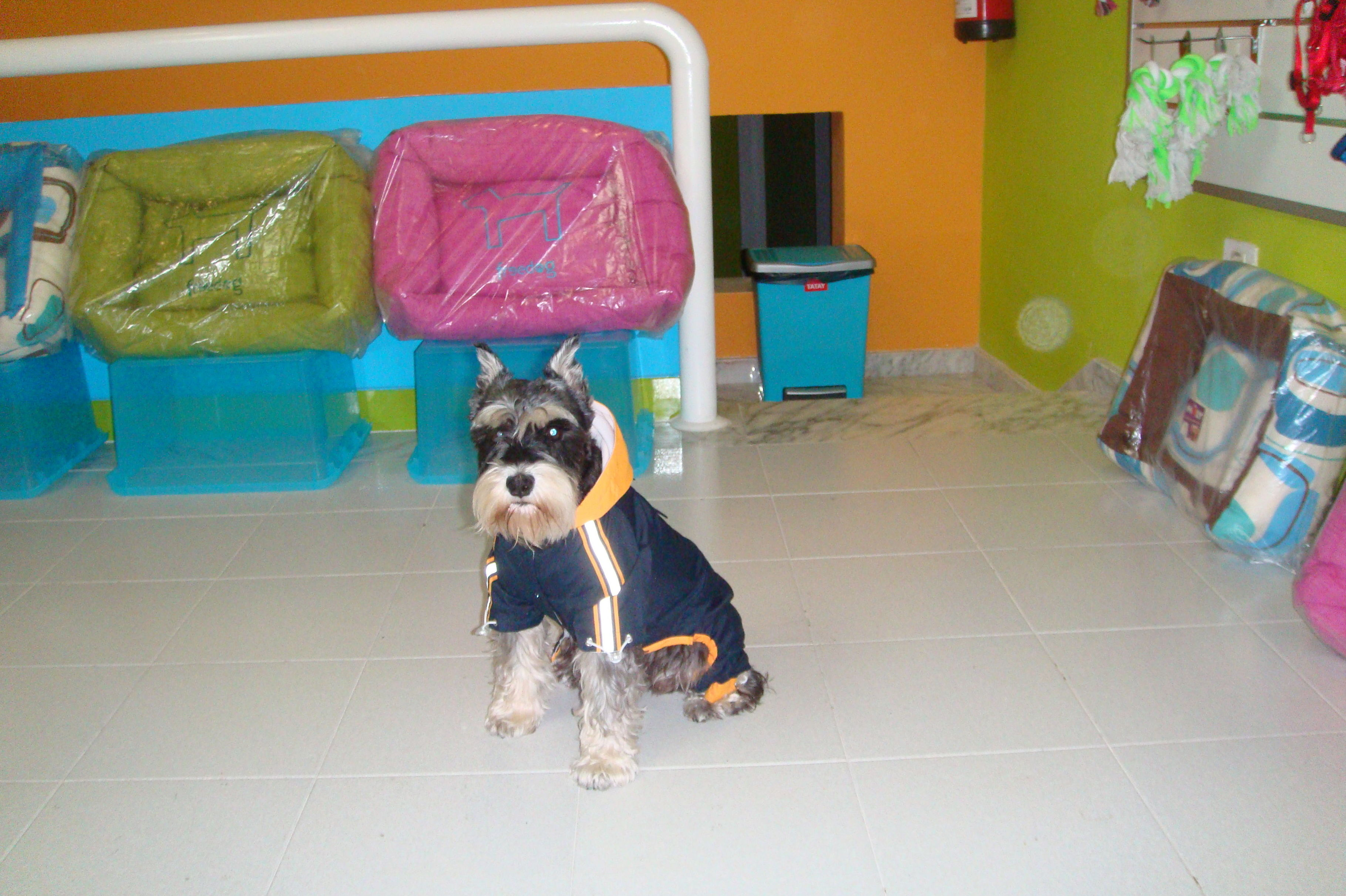 Peluquería canina tenerife