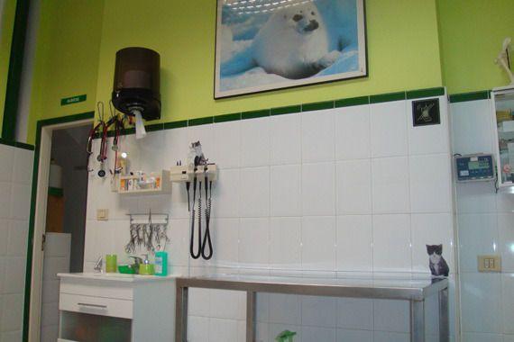 Medicina y cirugía general para mascotas en Tenerife