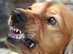 Limpieza dental por ultrasonidos